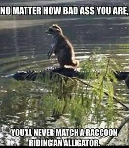 "Funny Raccoon refrigerator magnet 3 1/2 x 4 1/2 "" | eBay"