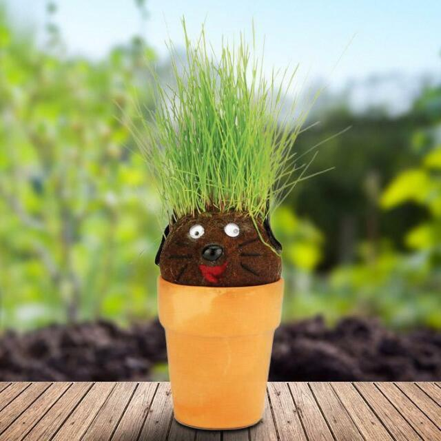 Science Kit Pot Head Pothead Magic Hair Plant Grass Planter Great Fun For Sale Online Ebay