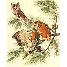 Quality Vintage Reproduction Audubon Print Birds of America Folio Screech Owl