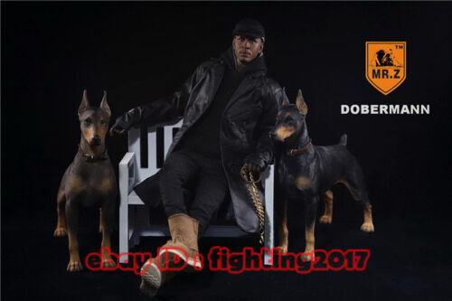 1//6 Mr.Z German Doberman Pinscher Figure MRZ Animal Model Dogs Collect 001-003