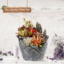 Sky Garden Succulent Plant Flower House Herb Basket Planter Pot Decor 10 x 12cm