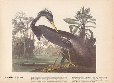 "1942 Vintage AUDUBON BIRDS #217 /""LOUISIANA HERON/"" Color Art Plate Lithograph"