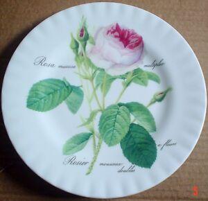 Un-Named-Collector-Plate-ROSA-MUSCOSA-MULTIPLEX-ROSIER-MOUSSEUX-DOUBLES-A-FLEURS