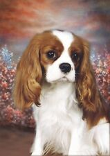 Cavalier King Charles Blank Card Design No 21 Starprint