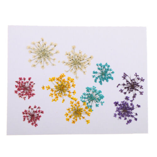 10pcs Pressed Dried Flower Natural Dried Flowers DIY ART Floral Decor Crafts