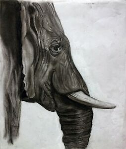The Elephant - Charcoal Drawing on Paper - 2021
