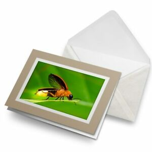 Greetings-Card-Biege-Natural-World-Firefly-Macro-Insect-16107