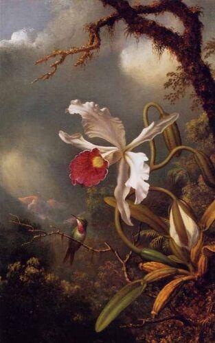 Dream-art Oil Martin Johnson Heade An Amethyst Hummingbird with a White Orchid