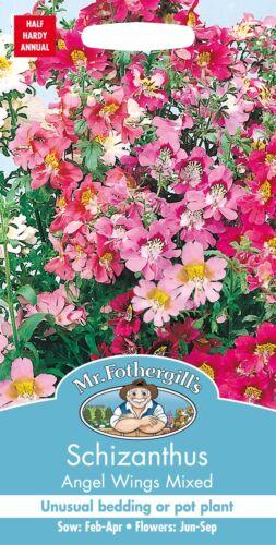 350 graines Monsieur Fothergills-Fleur-Schizanthus ailes d'ange mélangées