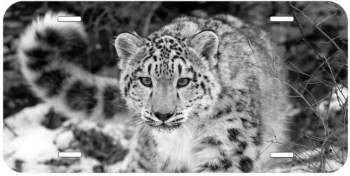 Snow Leopard B/&W Any Name Personalized Novelty Car License Plate