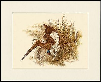 ENGLISH SPRINGER SPANIEL DOG AND BIRD GREAT DOG PRINT MOUNTED READY TO FRAME
