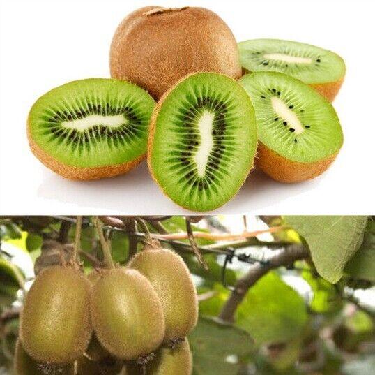 100pcs KIWI Seeds Easy to Plant  Delicious Healthy Fruit Actinidia Vine Seeds