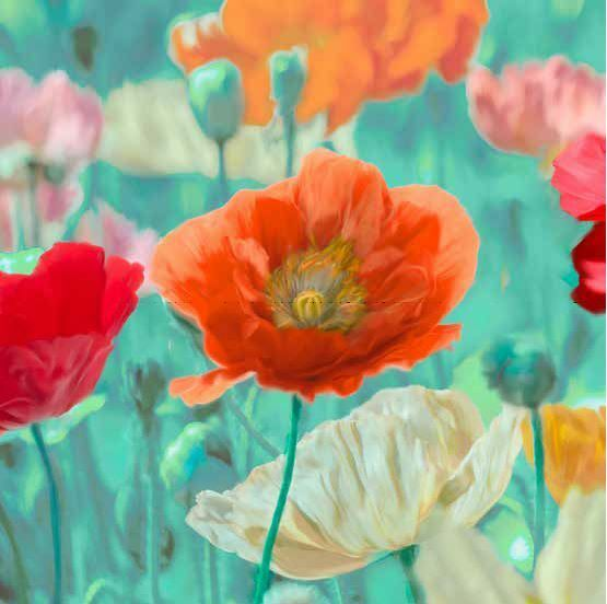 Cynthia Ann sur : Coquelicots en Bloom To le sur Ann Chassis Image Mohn-BluHommes  b437c5