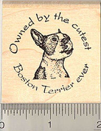 Boston Terrier Rubber Stamp Owned by the cutest H50302 WM