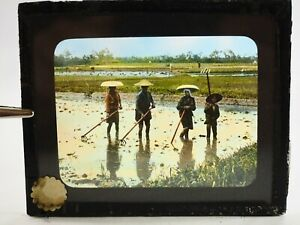 Agriculture-Rice-Japon-Main-Colore-Teinte-Magic-Lantern-Musee-Glisse-1904