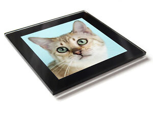 BENGAL-SNOW-Cat-Kitten-Premium-Glass-Table-Coaster-with-Gift-Box