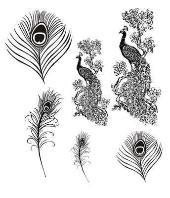 full set of PEACOCK unmounted rubber stamps, bird, feather, 6 stamps