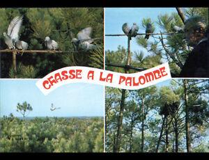 LANDES-40-CHASSEUR-a-la-CHASSE-a-la-PALOMBE