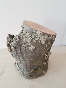 Details zu Baumstamm Ast Eiche Holz Natur Basteln Drechseln Deko Terrarium  18cm hoch ○11cm