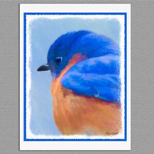 6 bluebird wild bird blank art note greeting cards ebay image is loading 6 bluebird wild bird blank art note greeting m4hsunfo