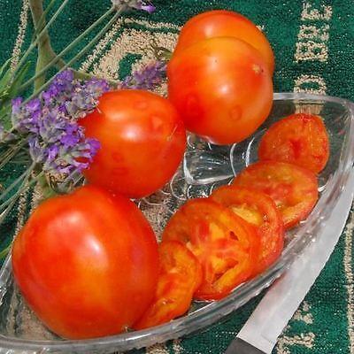 Vegetable - Tomato - Peppermint - 15 Seeds Bevorder De Productie Van Lichaamsvloeistof En Speeksel