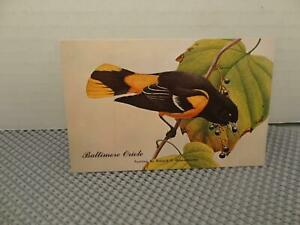 View-of-The-Baltimore-Oriole-State-Bird-of-Maryland-Richard-P-Grossenheider
