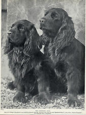SUSSEX SPANIEL TWO NAMED DOGS OLD 1930'S DOG PRINT