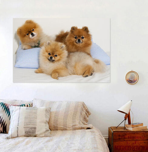 3D Three dogs5 Wall Stickers Vinyl Murals Wall Print Decal Art AJ STORE AU Lemon