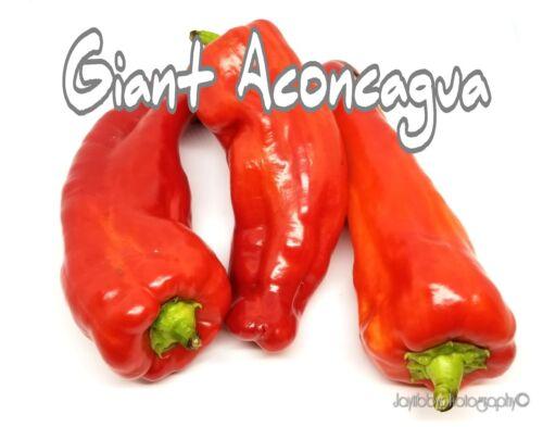 25+ Giant Aconcagua Pepper Seeds