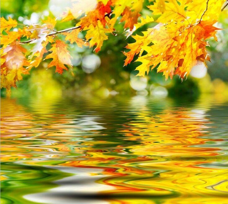 3D gold Maple Leaf044 Fototapeten Wandbild Fototapete Bild Tapete Familie Kinder