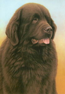 Nigel-Hemming-JUST-DOGS-BROWN-NEWFOUNDLAND-Newfs-Newfies-Working-Dogs-Art