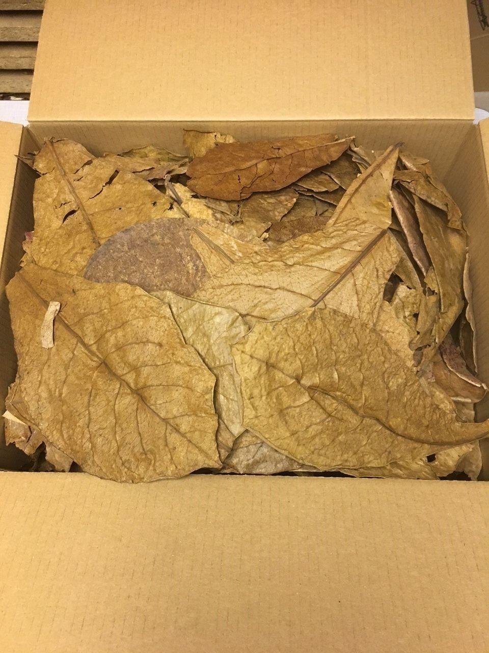 Hojas del almendro MALABAR 0,5kg unsortierte Mercancía B CATAPPA leaves