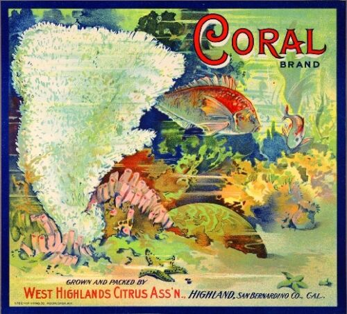 Highland Coral Tropical Fish Orange Citrus Fruit Crate Label Art Print