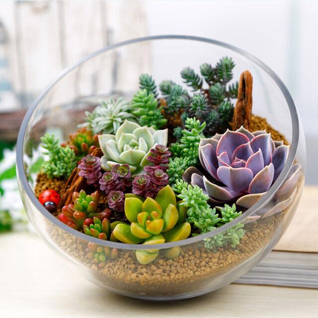 150 PCS Mixed Succulents Seeds Rare Succulent Potted Plant Home Garden Decor
