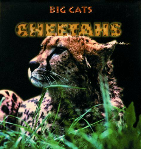 Cheetahs  Big Cats