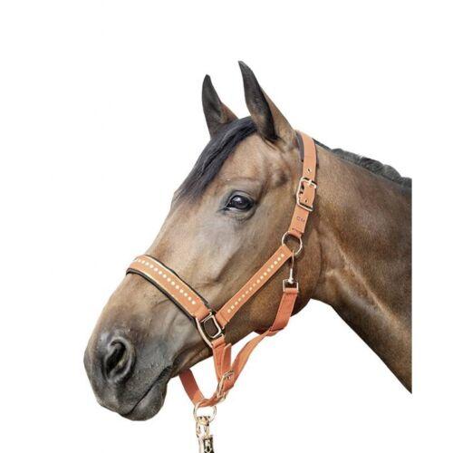 Licou Siena Camel Rouille qualité double réglage 8844