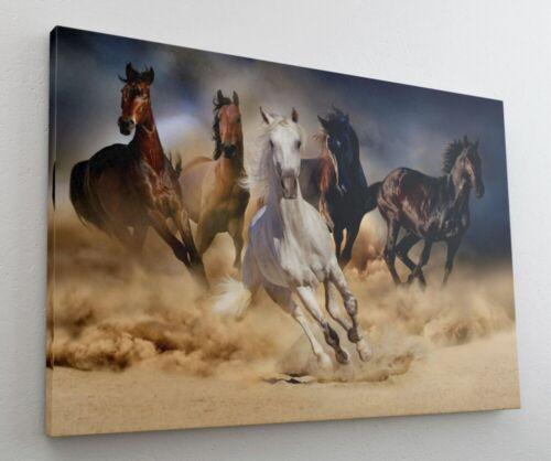 Pferde Rennen Pferd Tierwelt Leinwand Bild Wandbild Kunstdruck L0970