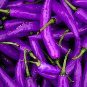 10pcs-Lila-Cayennepfeffer-lang-Chili-Paprika-Samen-Saatgut-Pflanze-Saemereien