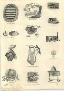 1854 Engravings Huber Ant Apparatus Hanging Nest Wasps - <span itemprop='availableAtOrFrom'>Jarrow, United Kingdom</span> - If for any reason you are not satisfied with your item, do let us know. If you wish to return it, you may, within 7 days, and we will issue you with a full refund. Most purchases from busi - <span itemprop='availableAtOrFrom'>Jarrow, United Kingdom</span>