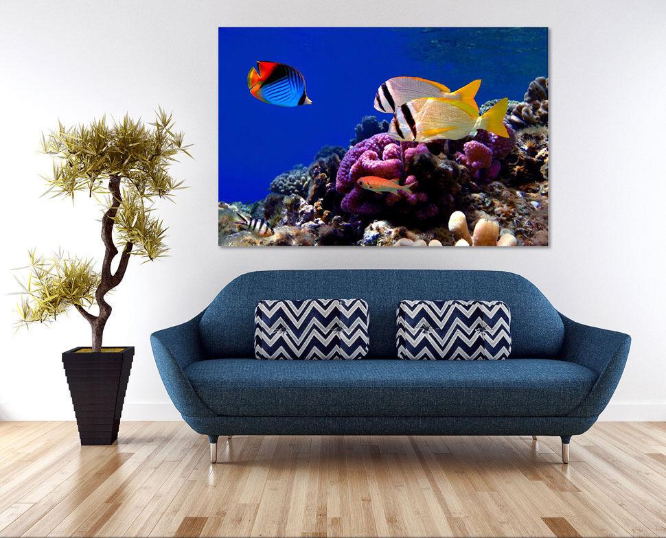 3D Farbige Fische, Korallen Fototapeten Wandbild  BildTapete Familie AJSTORE DE