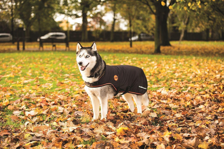 Horseware Ireland Rambo ionisierte ionisierte ionisierte Hund Teppich rrjk60 76f882
