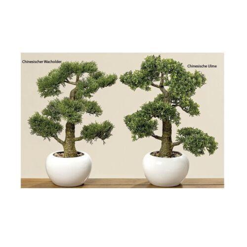Bonsai im Topf Chinesische Ulme H 33 cm