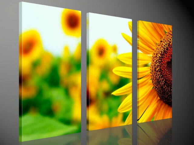 Stretched Canvas Print CLOSE TO THE SUN Sunflower Landscape Large Wall Art e1088