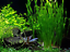 Aquarium Grass Seeds Mixed Water Grass Live Plant Aquarium Landscape 1000 Pcs