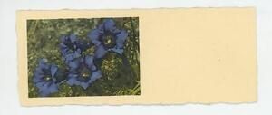 VINTAGE-1940s-BOTANICAL-BLUE-ANEMONE-FLOWERS-MINIATURE-ART-TINY-PRINT-BOOKMARK