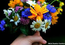 """BLUMENWIESE  """"MELODIE""""  ohne Gräser Wildblumen 1750 Samen --- 4 Fach sortiert"""
