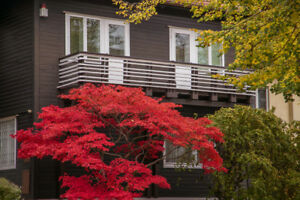 Garten-Baum-Samen-Raritaet-seltene-Pflanzen-winterhart-Feuerahorn-Herbstlaub-bunt
