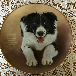 BORDER-COLLIE-DOG-PLATE-POETRY-OF-THE-BORDER-COLLIE-A-TREASURE-DANBURY-MINT