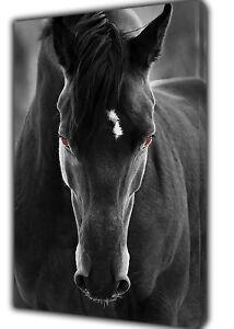 Beau cheval noir photo imprimé sur encadrée Toile Wall Art Decor  </span>