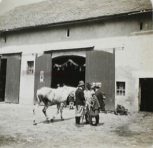 Francia-snapshot-Cavallo-Foto-PL52P7n5-Stereo-Placca-Da-Lente-Vintage